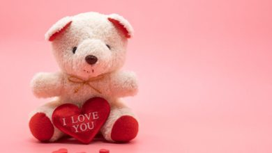 Photo of Find The Simplest Romantic & Bigger  Bear From Roses