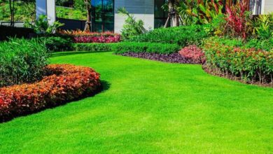 Photo of How to Get a Thicker Lawn and Fuller Green Grass