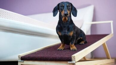 Photo of Best Puppy Ramps vs Dog Stairs vs Dogs Steps