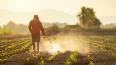 Photo of What Should You Know Before Filing a Paraquat Lawsuit?
