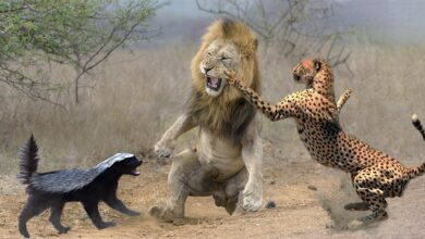 Photo of How to Deal with the Aftermath of a Violent Animal Attack?