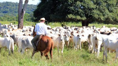 Photo of Is Cattle Ranching A Good Investment?
